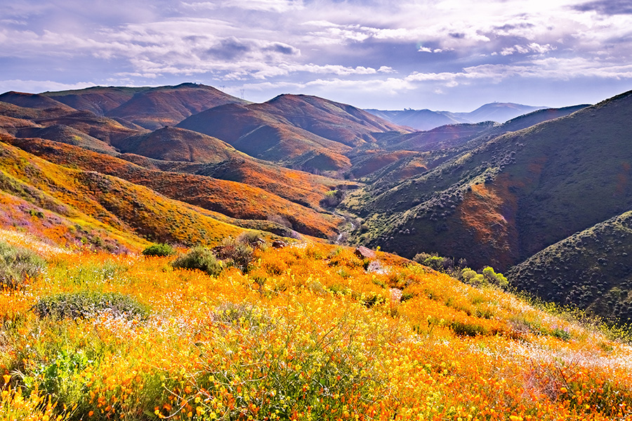 Contact - Landscape in Walker Canyon During the Superbloom California Poppies Covering the Mountain Valleys and Ridges in South California